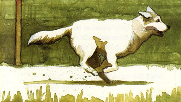 Hachiko. Il cane che aspettava