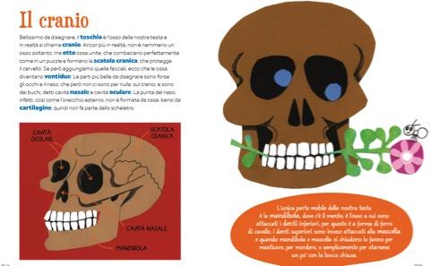 La parte dedicata al cranio del libro «Dalla testa ai piedi»