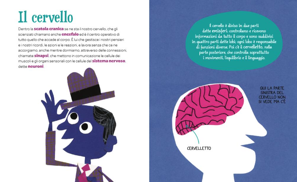 La parte dedicata al cervello del libro «Dalla testa ai piedi»