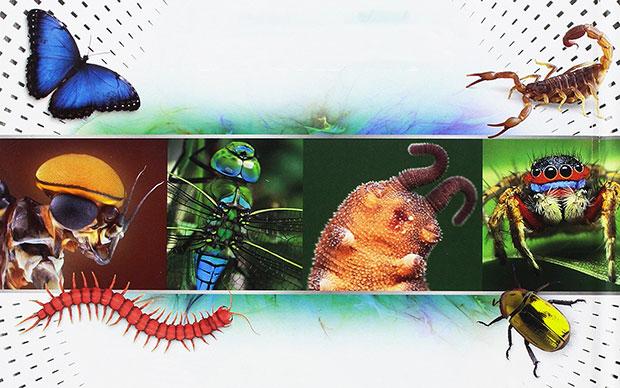 Super insetti