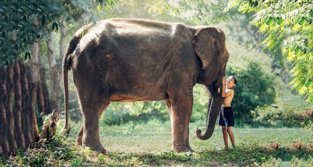 Libri con gli elefanti: i più belli, amati dai bambini